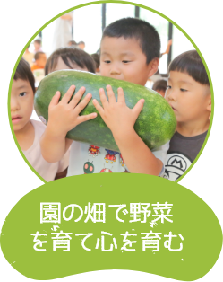 園の畑で野菜を育て心を育む